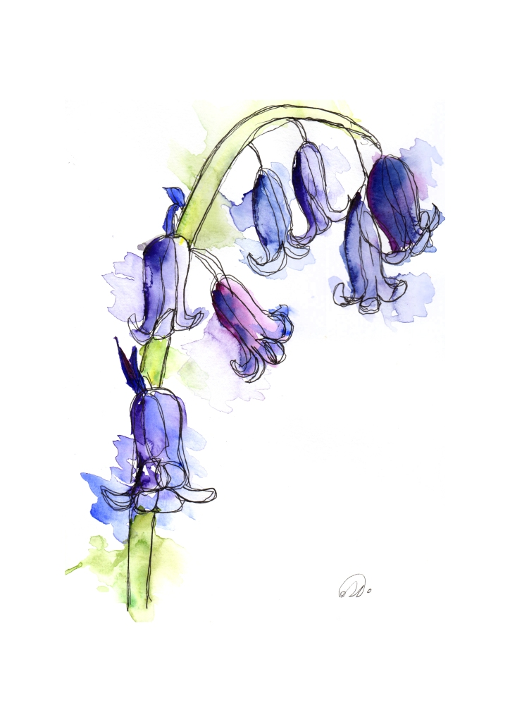 This image has an empty alt attribute; its file name is bluebells.jpg